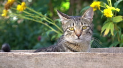 Cute cat in the wooden box. Shallow DOF Stock Footage