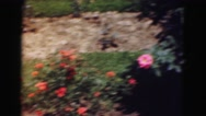 1946: woman and her rose gardens WASHINGTON, DC Stock Footage