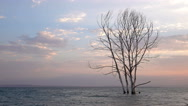 Dead tree in ocean under sunset clouds with copy space Stock Footage