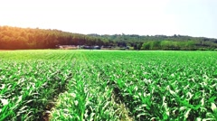 Aerial shot of a field with young corn in a spanish farming area Stock Footage