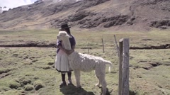 Woman standing with llama in field Stock Footage