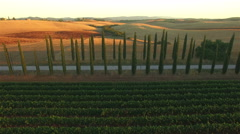 Aerial shot of cypress plants between road and vineyard. Tuscany, Italy. Stock Footage