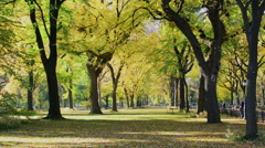 Autumn scenic view of Central Park Stock Footage