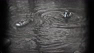 1946: wildlife in the park WASHINGTON, DC Stock Footage