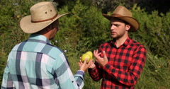 Two Peasant Farmer Men Talking Golden Apples and Fruit Cultivation in Bio Farm Stock Footage