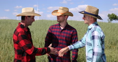 Cereal Cultivator Men Team Talking About Oat Field Collaboration in Grain Meadow Stock Footage