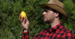 Bio Farmer Man Examining Lemon and Inspecting Quality in Countryland Plantation Stock Footage