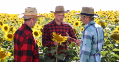Agriculturist Man Presenting Sunflower Farming Offer to Farmers Inspecting Field Stock Footage