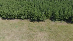 Trees in a row Stock Footage