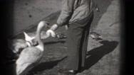 1946: birds are seen feeding themselves WASHINGTON, DC Stock Footage