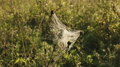 Cobwebs on the grass on a background of rural houses Stock Footage
