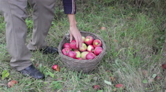 Put apples in the basket Stock Footage