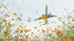 Airplane flying above daisy field in slow motion, high key Stock Footage