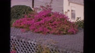 1963: pink garden CALIFORNIA Stock Footage