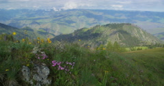 Spring wildflowers dance in the wind on rocky outcrop above Hells Canyon, Oregon Stock Footage