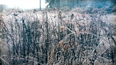 Dry goldenrod grass with ice on it in winter Stock Footage