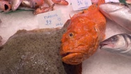Fish in the market La Boqueria in Barcelona Stock Footage