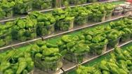 Green pepper in the market La Boqueria in Barcelona Stock Footage