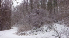 Snow covered north carolina mountains Stock Footage