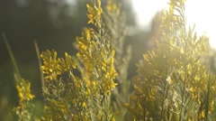 Field with wild grasses at sunset.Beautiful summer landscape, rural nature Stock Footage