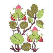 Colorful botanical hand drawn strawberry bush isolated on white background. Stock Illustration