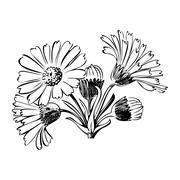 Hand drawn bouquet of daisy flowers isolated on white background Stock Illustration