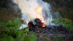 Forest fire. Nature. Ecology problem. Stock Footage