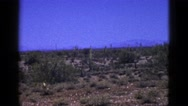 1953: cactuses and desert CALIFORNIA Stock Footage