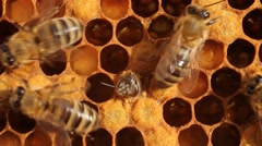 Birth of bee cooling exit Stock Footage