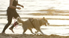 Female runner jogging with siberian husky dogs during the sunrise on beach Stock Footage
