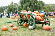 Big pile of pumpkins on hay in a wooden cart Stock Photos