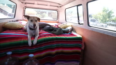 A man driving his classic mini-bus van with his dog in the back seat. Stock Footage
