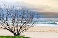 Dry tree on sandy beach Stock Photos