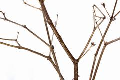 Close up  Shot of Twig of Dry Dead Plant Stock Photos