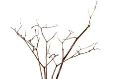 Front Shot of Twigs of Dry Dead Plant Stock Photos