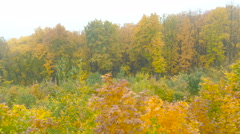 Scenic autumn landscape with colourful trees, grass and other vegetation in t Stock Footage