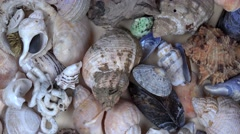 Collection of seashells shell conch cockleshell for backgrounds. turntable Stock Footage
