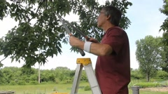 Home owner trimming trees Stock Footage