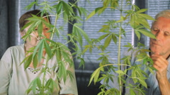 Senior couple in love enjoying Cannabis plant Stock Footage