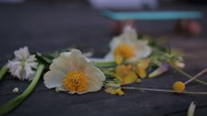 Summer sunshine reflexion on flowers Stock Footage