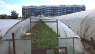Old hothouse and new modern building Stock Footage