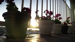 Sun gets through. Light between two flower pots Stock Footage