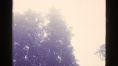 1953: snowing heavy tilt down from top of large pine tree BOSTON Stock Footage