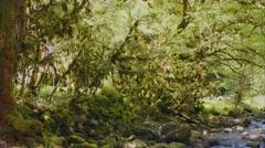 Abhazia Mountain Wood Stock Footage