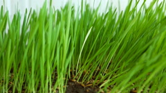 Personality in the crowd. White blade (alien) among Green Grass. Originality  Stock Footage