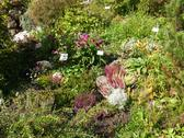 Bavaria Berchtesgaden National Park Ramsau Medical Herbal plant garden Europe Stock Photos