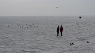Ice at the sea. Stock Footage