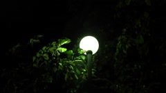 Night Street Lamp With flying insects around Stock Footage