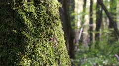 Moss Covered Tree Trunk In The Forest Illuminated By Sunlight Stock Footage