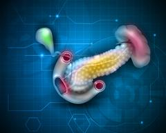 Pancreas and surrounding organs scientific background Stock Illustration